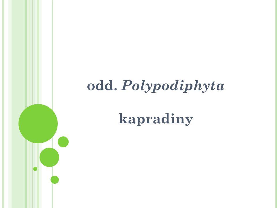 odd. Polypodiphyta kapradiny