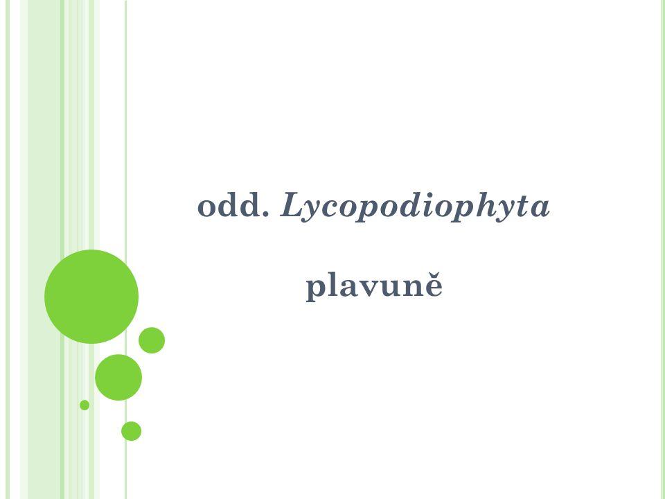 odd. Lycopodiophyta plavuně