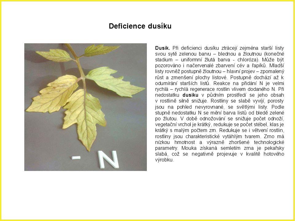 Dusík. Při deficienci dusíku ztrácejí zejména starší listy svou sytě zelenou barvu – blednou a žloutnou (konečné stadium – uniformní žlutá barva - chl