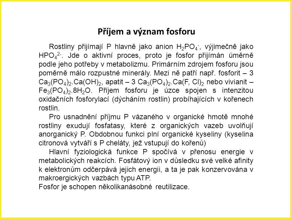 Příjem a význam fosforu Rostliny přijímají P hlavně jako anion H 2 PO 4 -, výjimečně jako HPO 4 2-. Jde o aktivní proces, proto je fosfor přijímán úmě