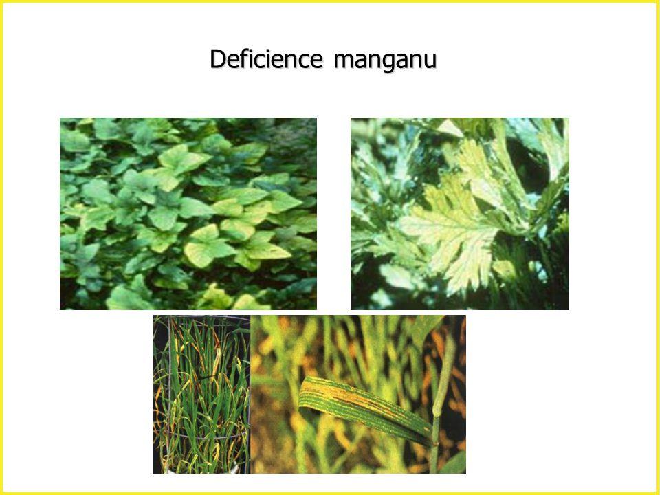 Deficience manganu