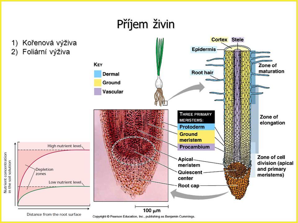 Příjem živin 1)Kořenová výživa 2)Foliární výživa