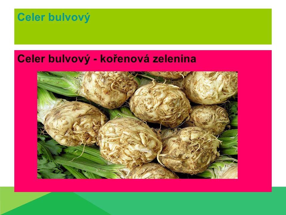 Celer bulvový Celer bulvový - kořenová zelenina