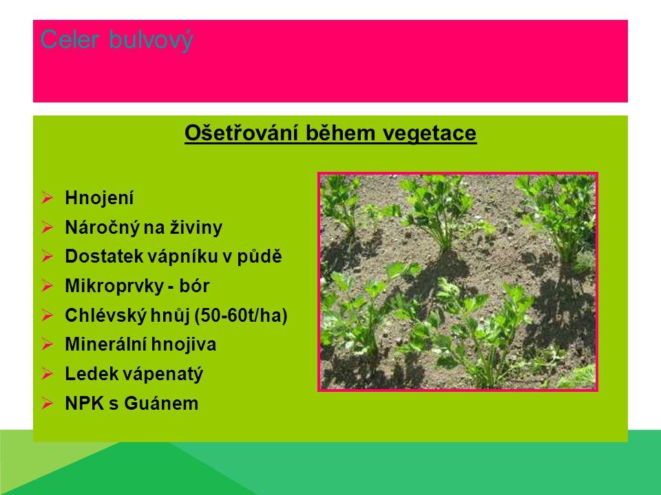 Celer bulvový Ošetřování během vegetace  Hnojení  Náročný na živiny  Dostatek vápníku v půdě  Mikroprvky - bór  Chlévský hnůj (50-60t/ha)  Minerální hnojiva  Ledek vápenatý  NPK s Guánem