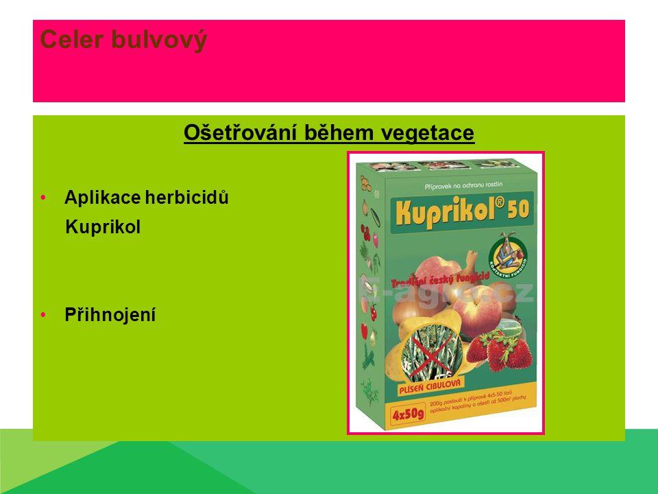 Celer bulvový Sklizeň oMechanizační prostředky pro sklizeň oSklízeče oSklízecí linky oDrtiče natě oTřídící a čistící linky