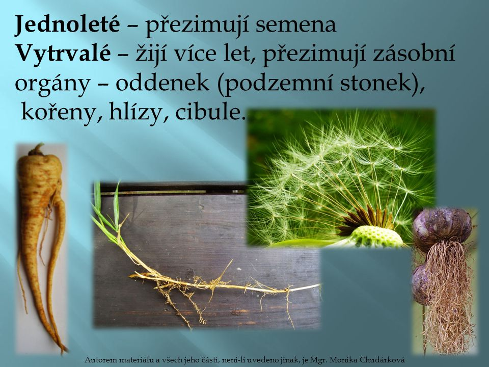tyčinky pestík kalich koruna Autorem materiálu a všech jeho částí, není-li uvedeno jinak, je Mgr.