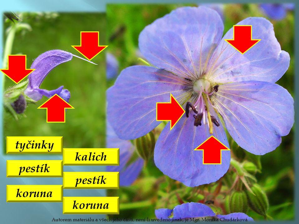 tyčinky pestík kalich koruna Autorem materiálu a všech jeho částí, není-li uvedeno jinak, je Mgr. Monika Chudárková