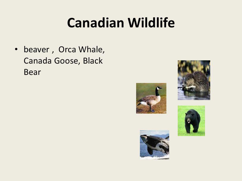 Canadian Wildlife beaver, Orca Whale, Canada Goose, Black Bear