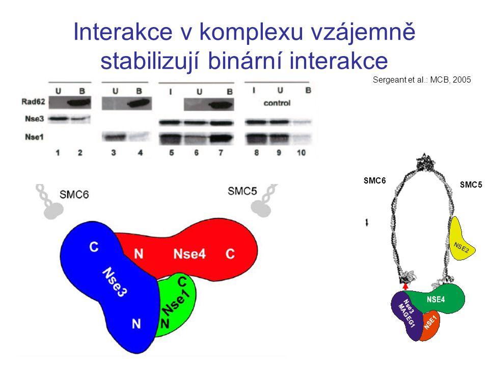 Interakce v komplexu vzájemně stabilizují binární interakce Sergeant et al.: MCB, 2005 SMC6 SMC5