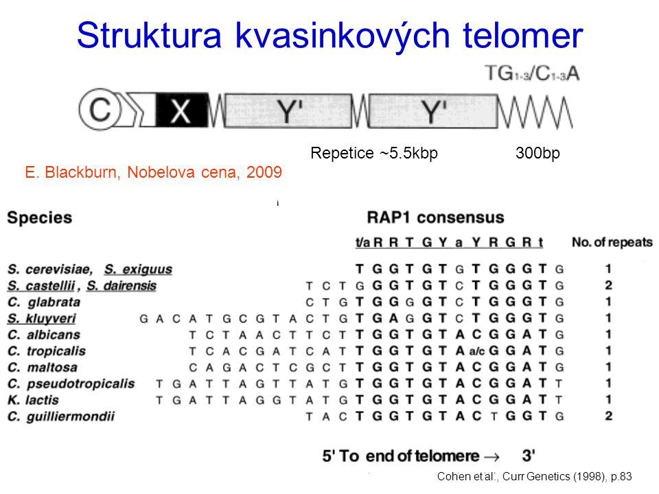 Struktura kvasinkových telomer Lowell et al., Cell Mol Life Sci (1998), p.32 300bpRepetice ~5.5kbp Telomery umlčují transkripci – ADE2 reporter je pod