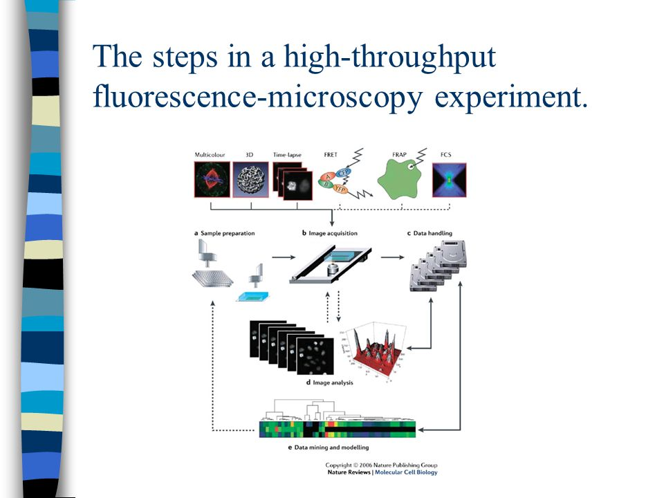 The steps in a high-throughput fluorescence-microscopy experiment.