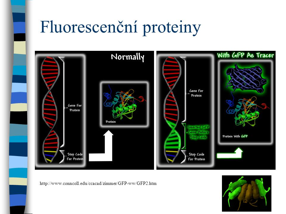 Fluorescenční proteiny http://www.conncoll.edu/ccacad/zimmer/GFP-ww/GFP2.htm