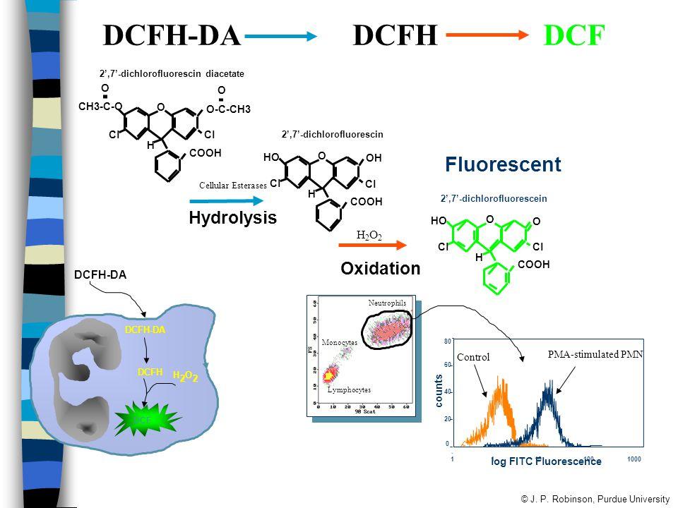 DCFH-DA DCFH DCF COOH H Cl O O-C-CH3 O CH3-C-O Cl O COOH H Cl OH HO Cl O COOH H Cl O HO Cl O Fluorescent Hydrolysis Oxidation 2',7'-dichlorofluorescin