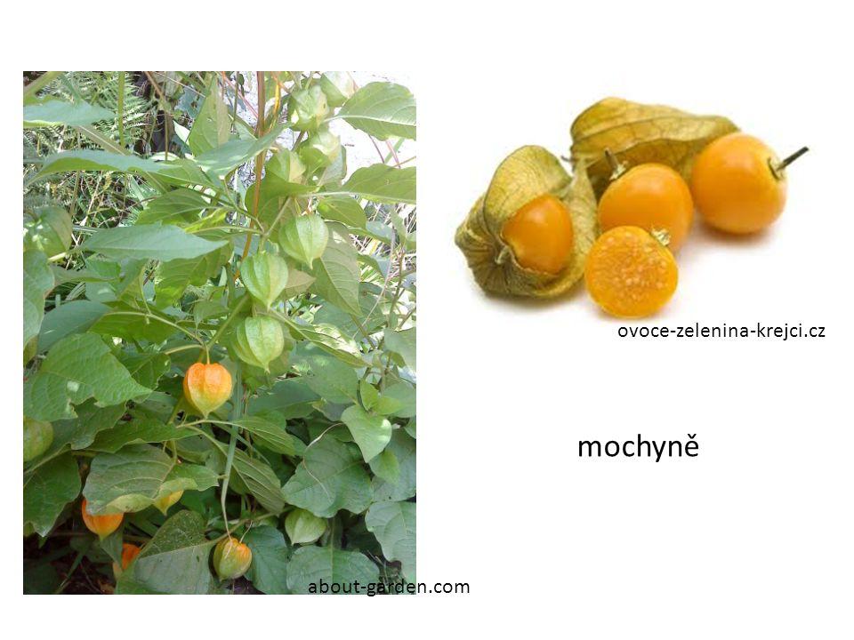 ovoce-zelenina-krejci.cz about-garden.com mochyně