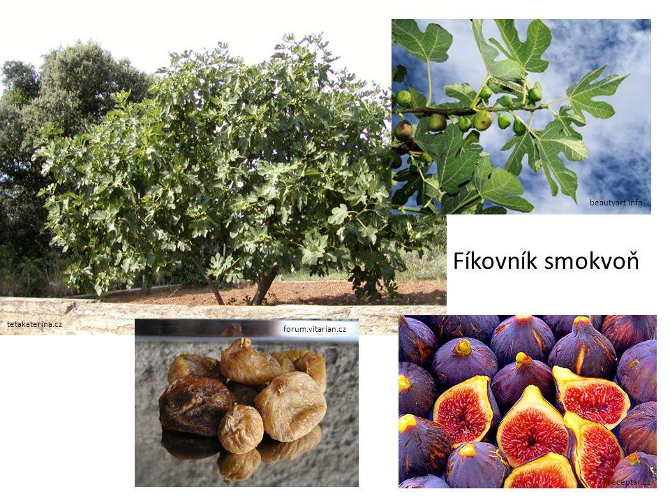 panoramio.com cokolada-bonbons-chocolate.eu tropical-plants-flowers-and-decor.com kakaovník