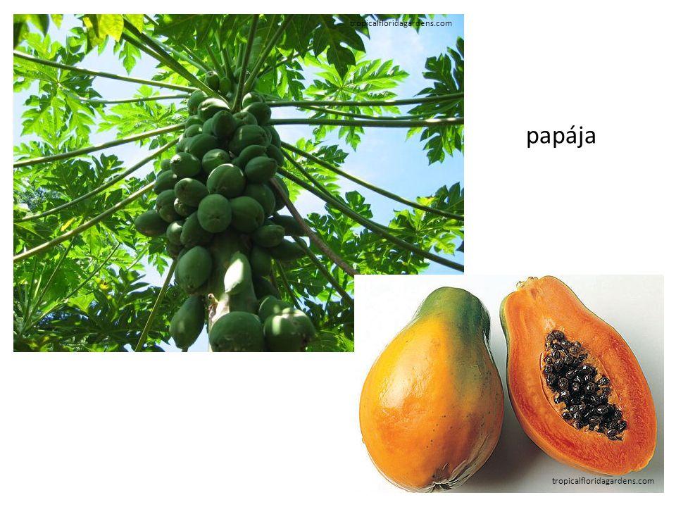 tropicalfloridagardens.com papája
