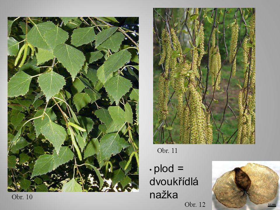 Obr. 10 Obr. 11 Obr. 12 plod = dvoukřídlá nažka