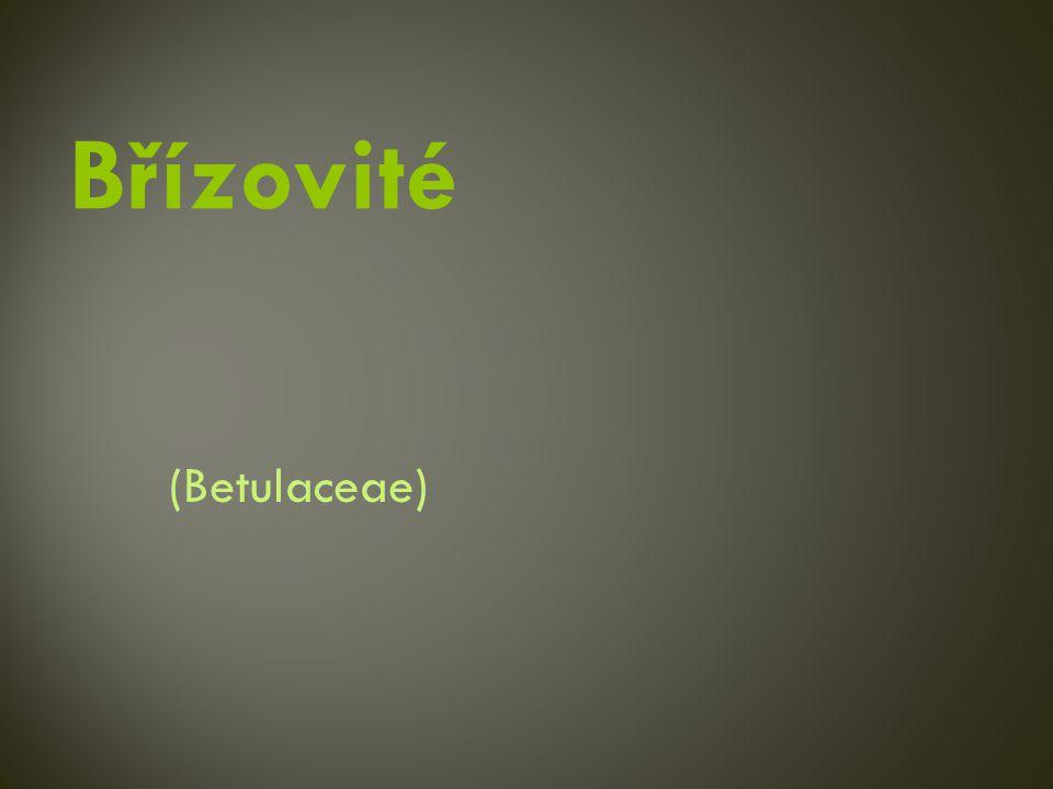 (Betulaceae)