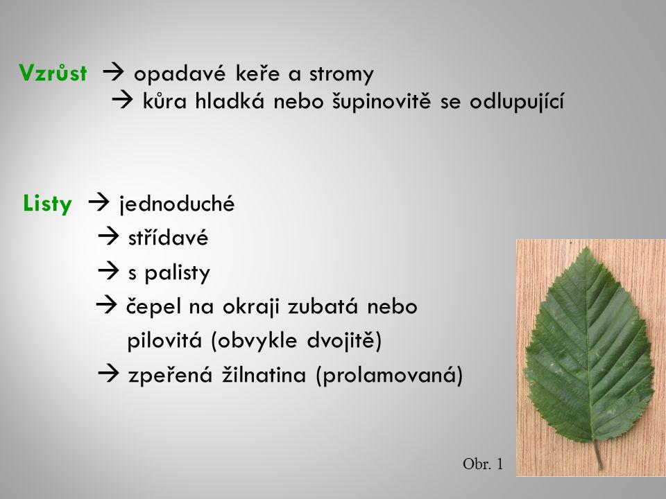 Vzrůst  opadavé keře a stromy  kůra hladká nebo šupinovitě se odlupující Listy  jednoduché  střídavé  s palisty  čepel na okraji zubatá nebo pilovitá (obvykle dvojitě)  zpeřená žilnatina (prolamovaná) Obr.