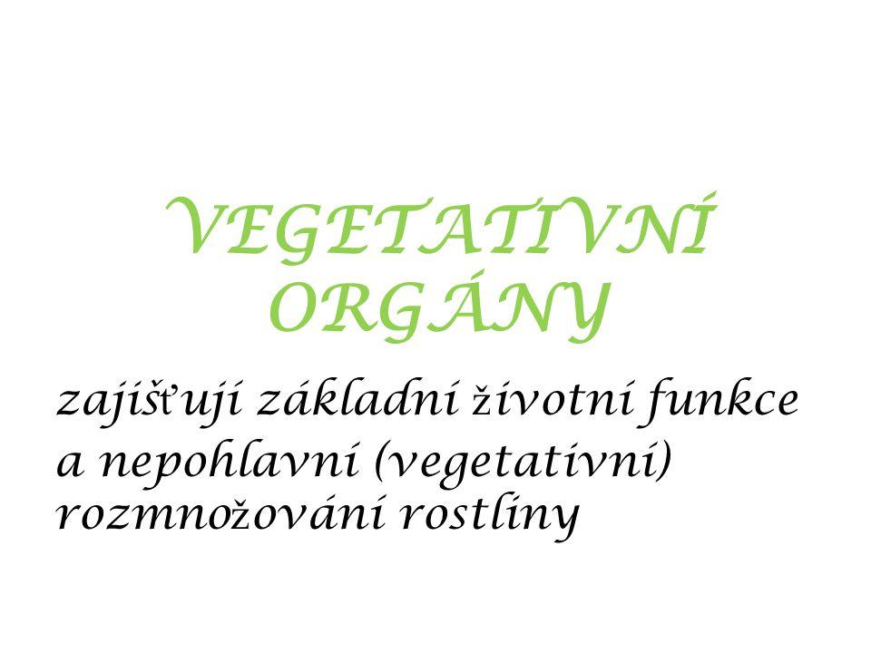 VEGETATIVNÍ ORGÁNY zajiš ť ují základní ž ivotní funkce a nepohlavní (vegetativní) rozmno ž ování rostliny