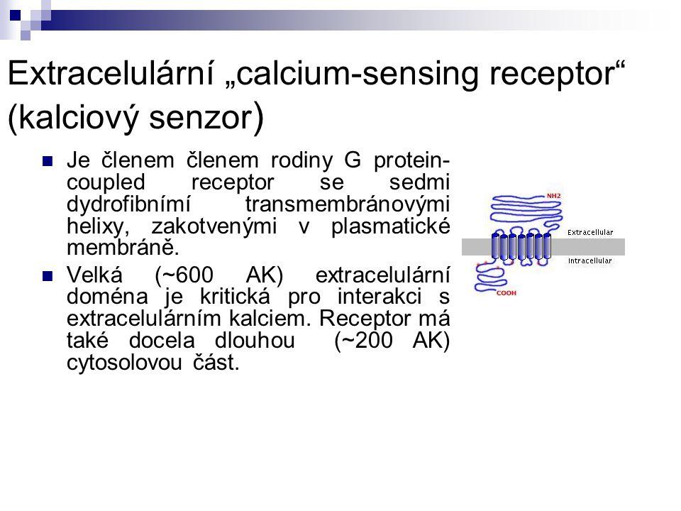 """Extracelulární """"calcium-sensing receptor"""" (kalciový senzor ) Je členem členem rodiny G protein- coupled receptor se sedmi dydrofibnímí transmembránový"""