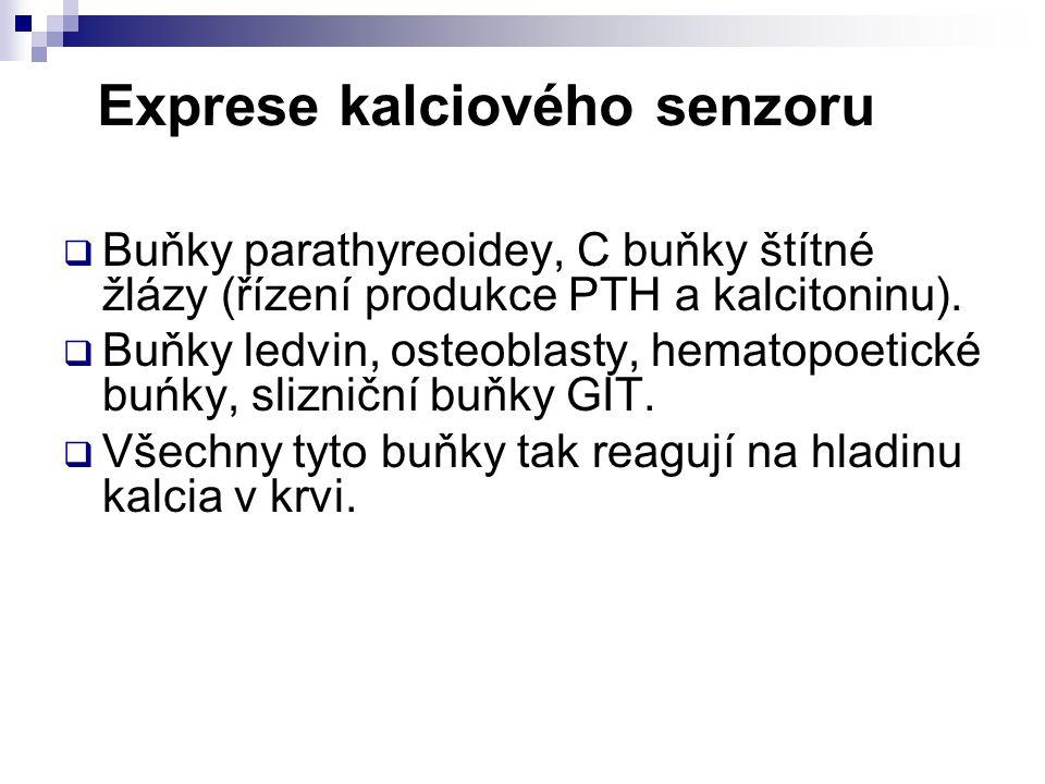 Exprese kalciového senzoru  Buňky parathyreoidey, C buňky štítné žlázy (řízení produkce PTH a kalcitoninu).  Buňky ledvin, osteoblasty, hematopoetic