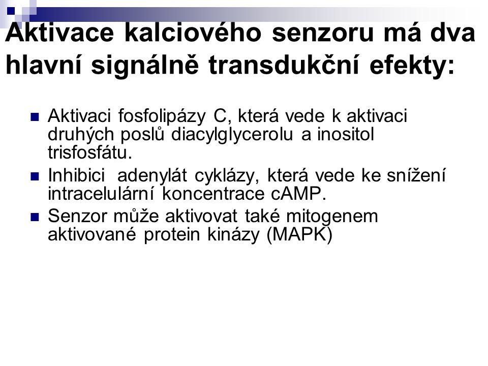 Aktivace kalciového senzoru má dva hlavní signálně transdukční efekty: Aktivaci fosfolipázy C, která vede k aktivaci druhých poslů diacylglycerolu a i
