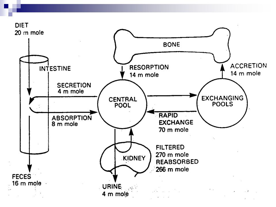 K předchozímu obrázku Proces remodelace začíná aktivací hematopoetických prekurzorů na osteoklasty, což vyžaduje za normálních okolností interakci s buňkami osteoblastické linie.