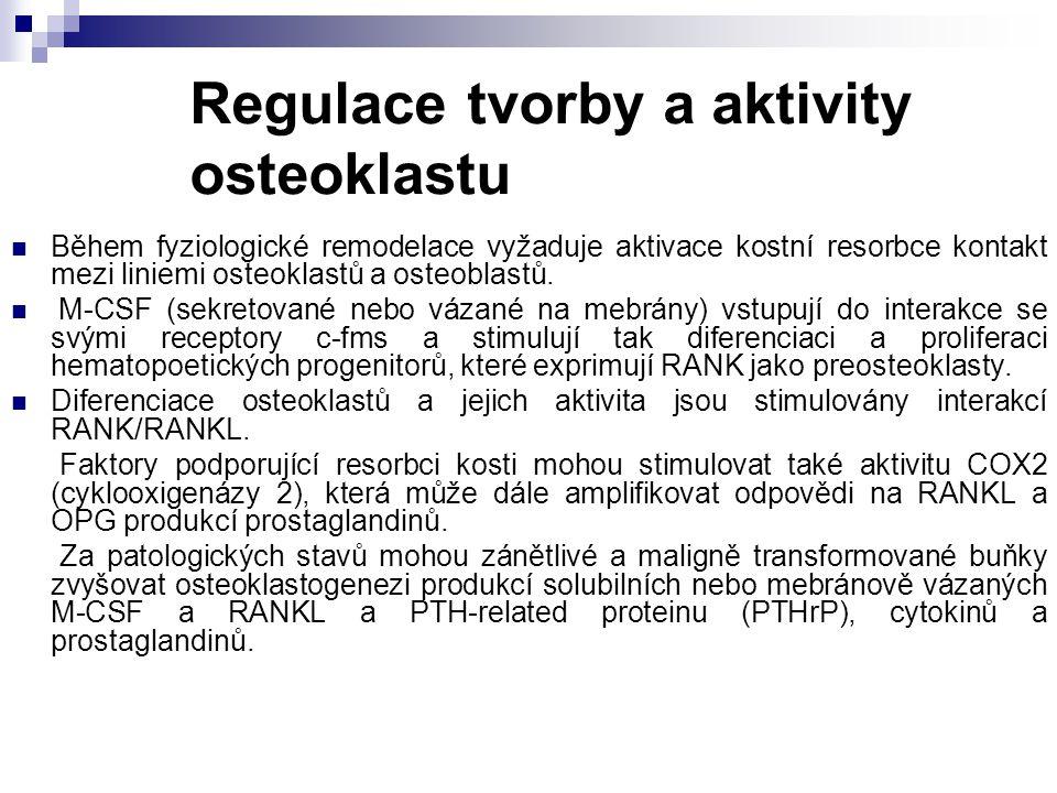 Regulace tvorby a aktivity osteoklastu Během fyziologické remodelace vyžaduje aktivace kostní resorbce kontakt mezi liniemi osteoklastů a osteoblastů.