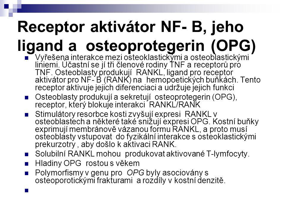 Receptor aktivátor NF- B, jeho ligand a osteoprotegerin (OPG) Vyřešena interakce mezi osteoklastickými a osteoblastickými liniemi. Účastní se jí tři č