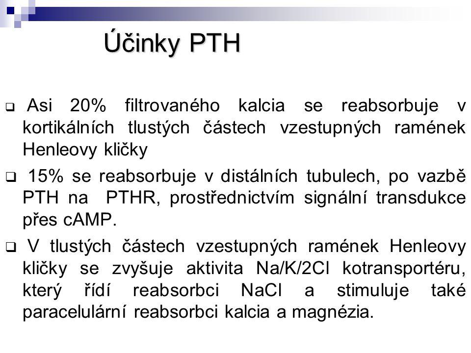 Účinky PTH  Asi 20% filtrovaného kalcia se reabsorbuje v kortikálních tlustých částech vzestupných ramének Henleovy kličky  15% se reabsorbuje v dis