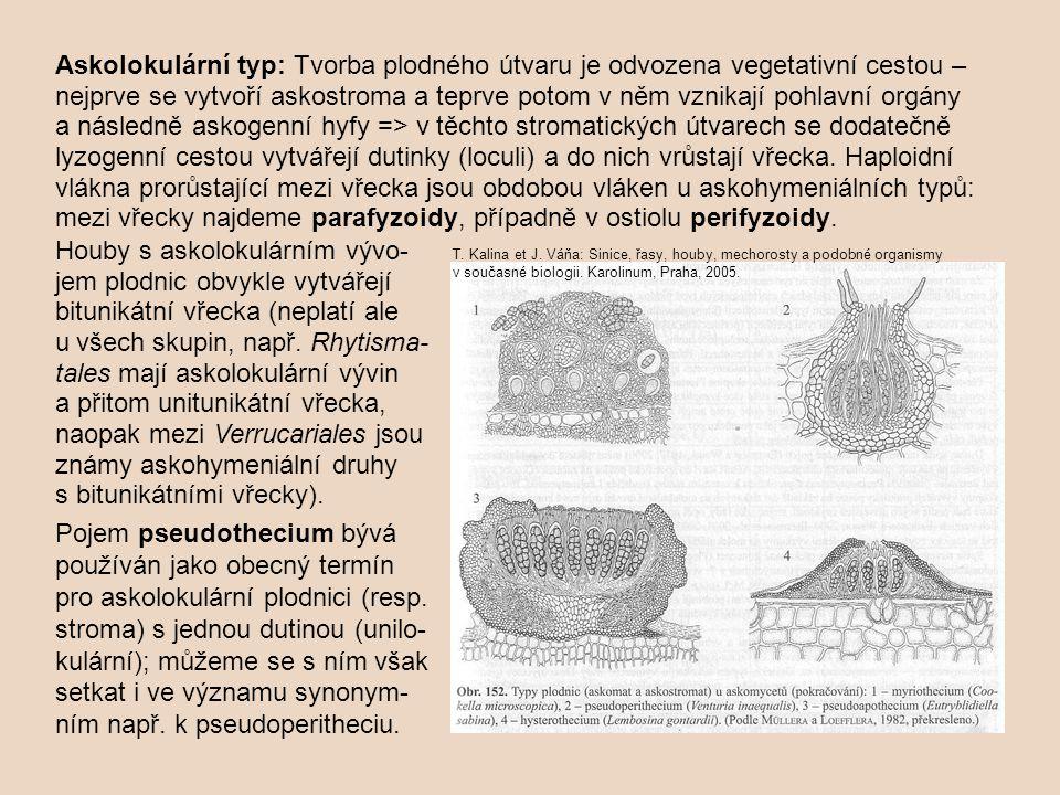 Askolokulární typ: Tvorba plodného útvaru je odvozena vegetativní cestou – nejprve se vytvoří askostroma a teprve potom v něm vznikají pohlavní orgány a následně askogenní hyfy => v těchto stromatických útvarech se dodatečně lyzogenní cestou vytvářejí dutinky (loculi) a do nich vrůstají vřecka.