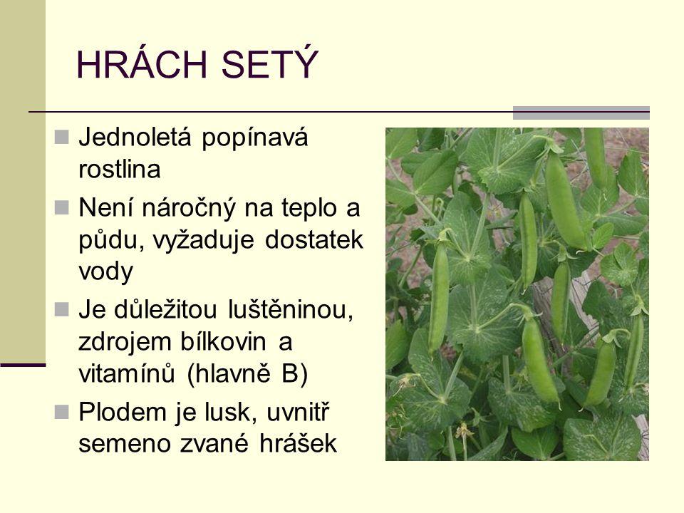 HRÁCH SETÝ Jednoletá popínavá rostlina Není náročný na teplo a půdu, vyžaduje dostatek vody Je důležitou luštěninou, zdrojem bílkovin a vitamínů (hlavně B) Plodem je lusk, uvnitř semeno zvané hrášek