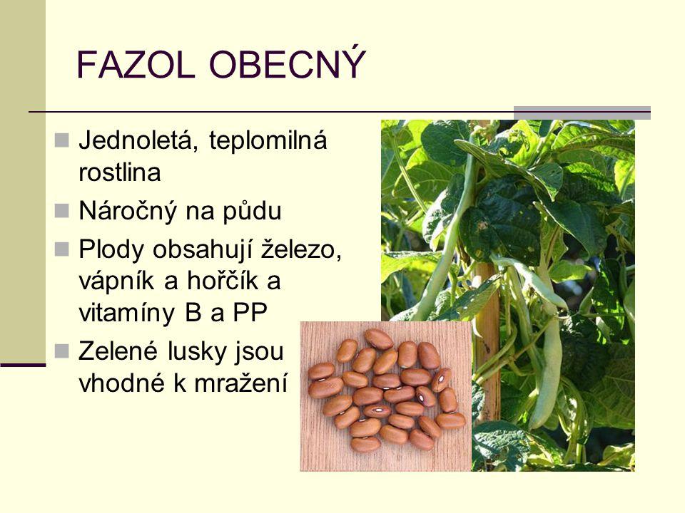 FAZOL OBECNÝ Jednoletá, teplomilná rostlina Náročný na půdu Plody obsahují železo, vápník a hořčík a vitamíny B a PP Zelené lusky jsou vhodné k mražení