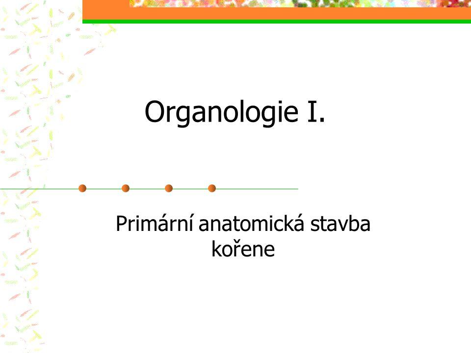 Organologie I. Primární anatomická stavba kořene