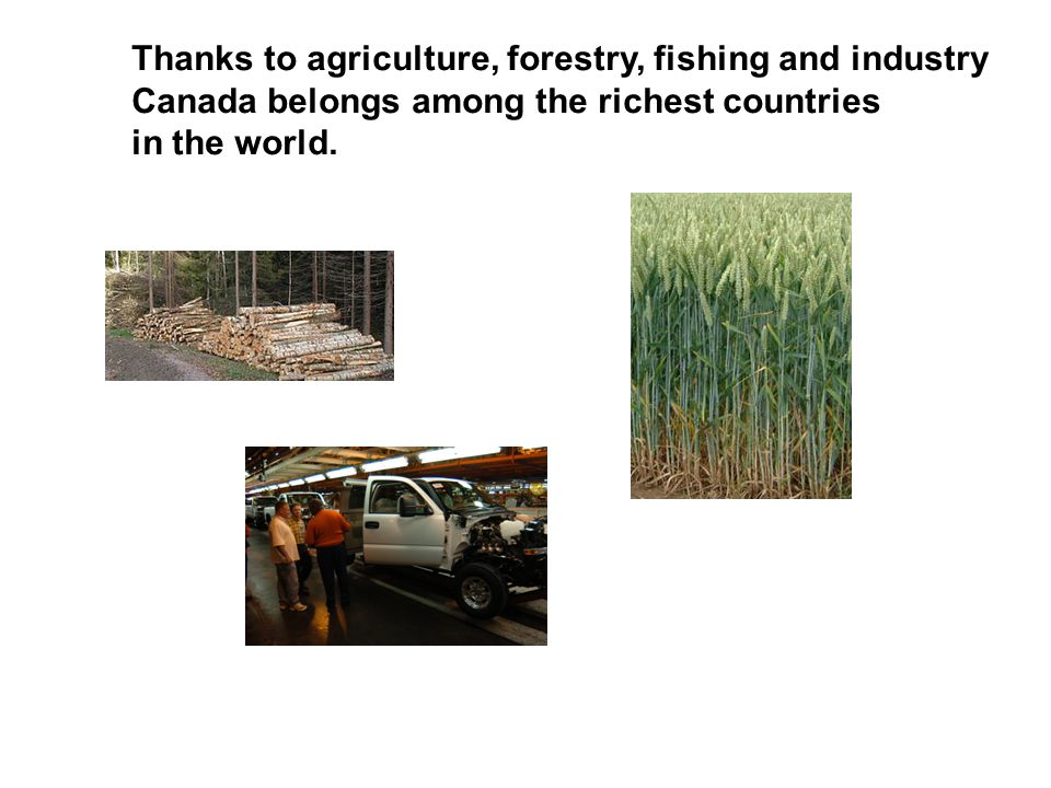 Thanks to agriculture, forestry, fishing and industry Canada belongs among the richest countries in the world.