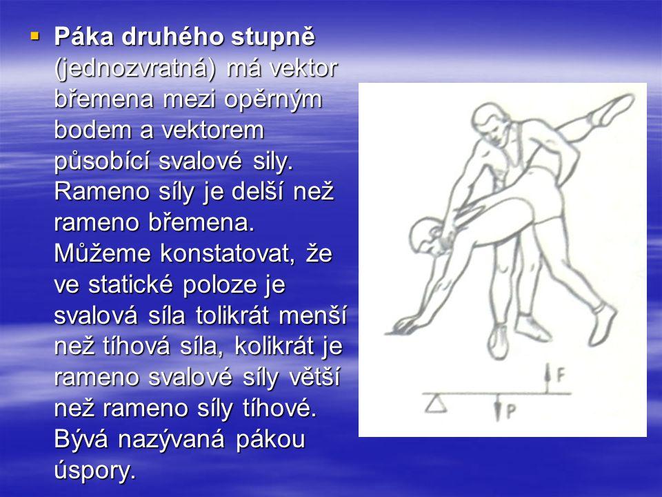  Páka druhého stupně (jednozvratná) má vektor břemena mezi opěrným bodem a vektorem působící svalové sily. Rameno síly je delší než rameno břemena. M