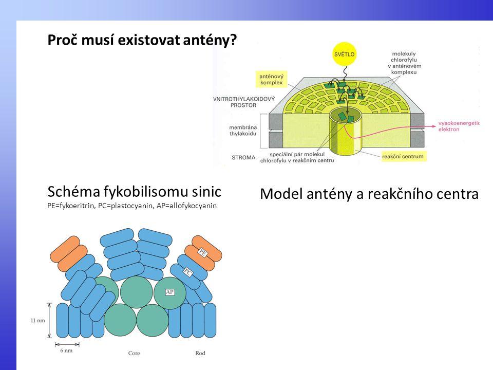 Schéma fykobilisomu sinic PE=fykoeritrin, PC=plastocyanin, AP=allofykocyanin Model antény a reakčního centra Proč musí existovat antény?