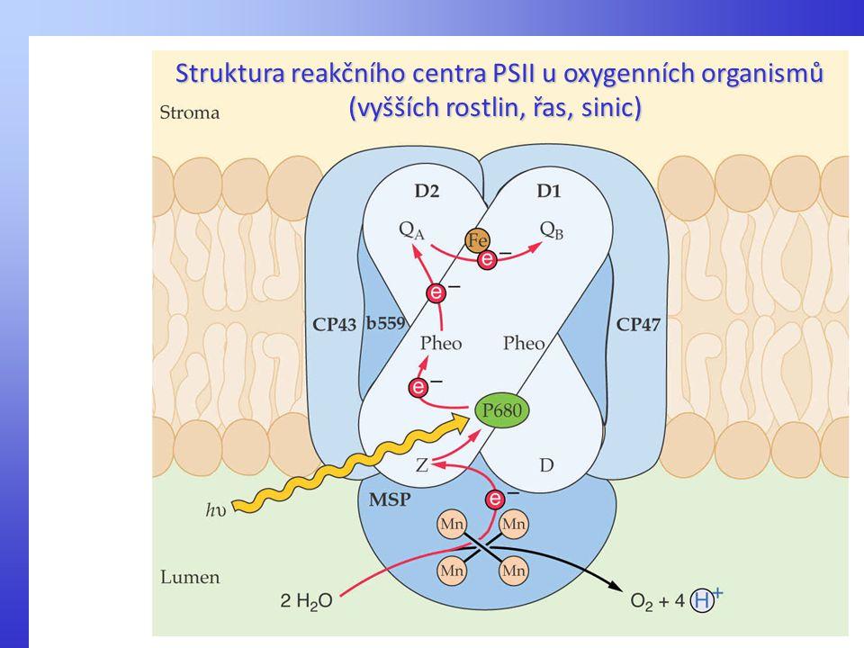 Struktura reakčního centra PSII u oxygenních organismů (vyšších rostlin, řas, sinic)