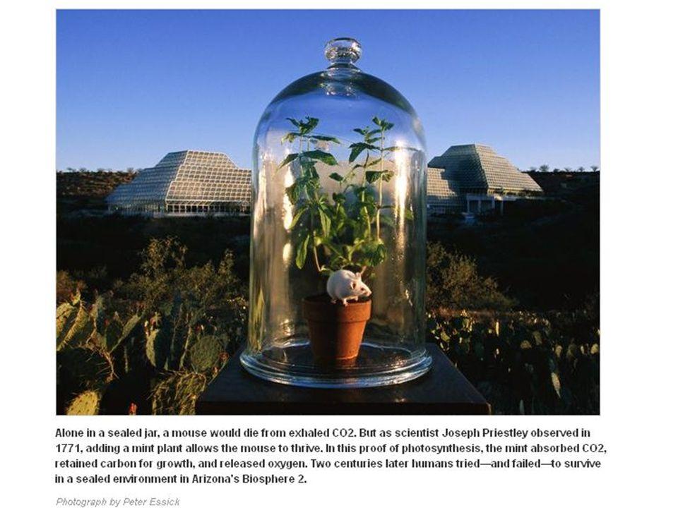 Buch s.595 Elektronový transport ve fotosyntetické membráně při oxygenní fotosyntéze (Z-schéma)