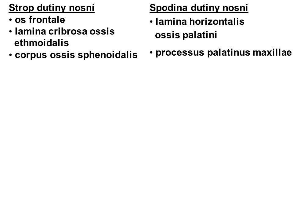 Koniotomie, Tracheotomie Koniotomie (lig.