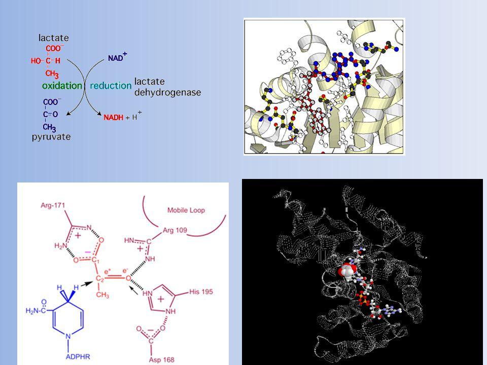 Svět RNA: život bez kódu