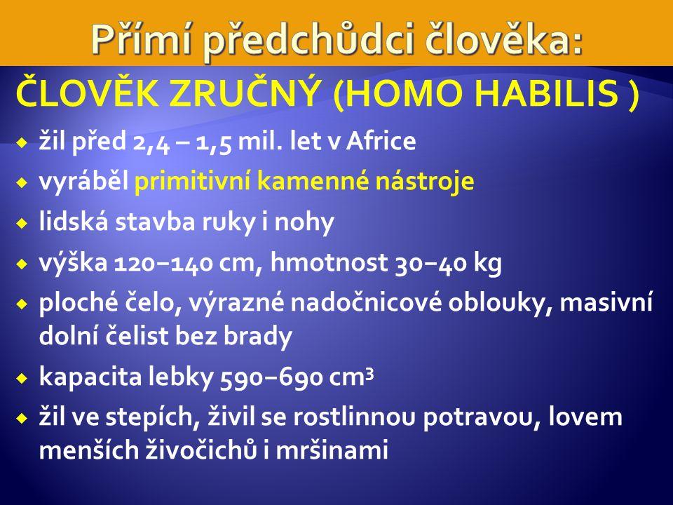 ČLOVĚK ZRUČNÝ (HOMO HABILIS )  žil před 2,4 – 1,5 mil.