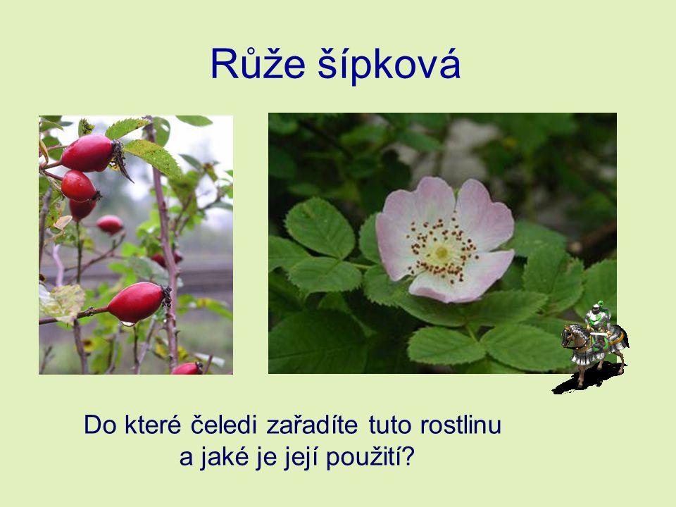 Růže šípková Do které čeledi zařadíte tuto rostlinu a jaké je její použití?