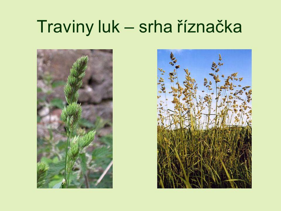 Traviny luk – srha říznačka