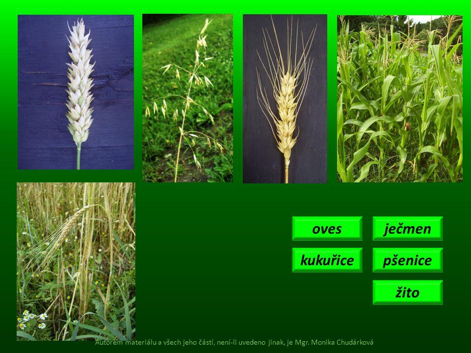 ječmen pšenice žito oves kukuřice Autorem materiálu a všech jeho částí, není-li uvedeno jinak, je Mgr. Monika Chudárková