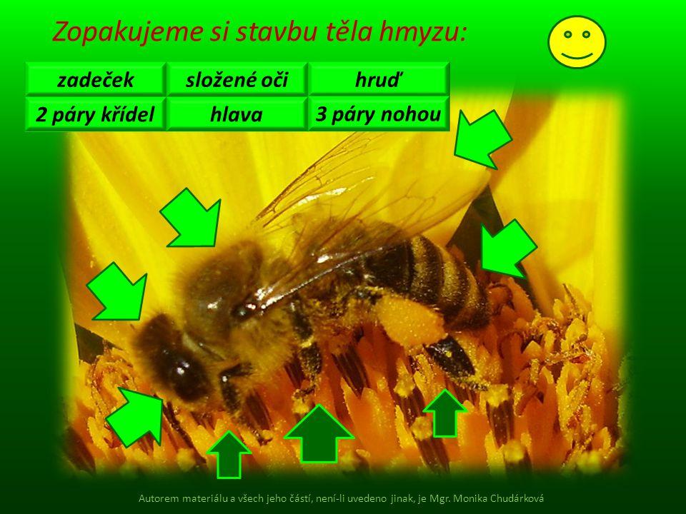 Zopakujeme si stavbu těla hmyzu: zadeček 2 páry křídel složené oči hlava hruď 3 páry nohou Autorem materiálu a všech jeho částí, není-li uvedeno jinak