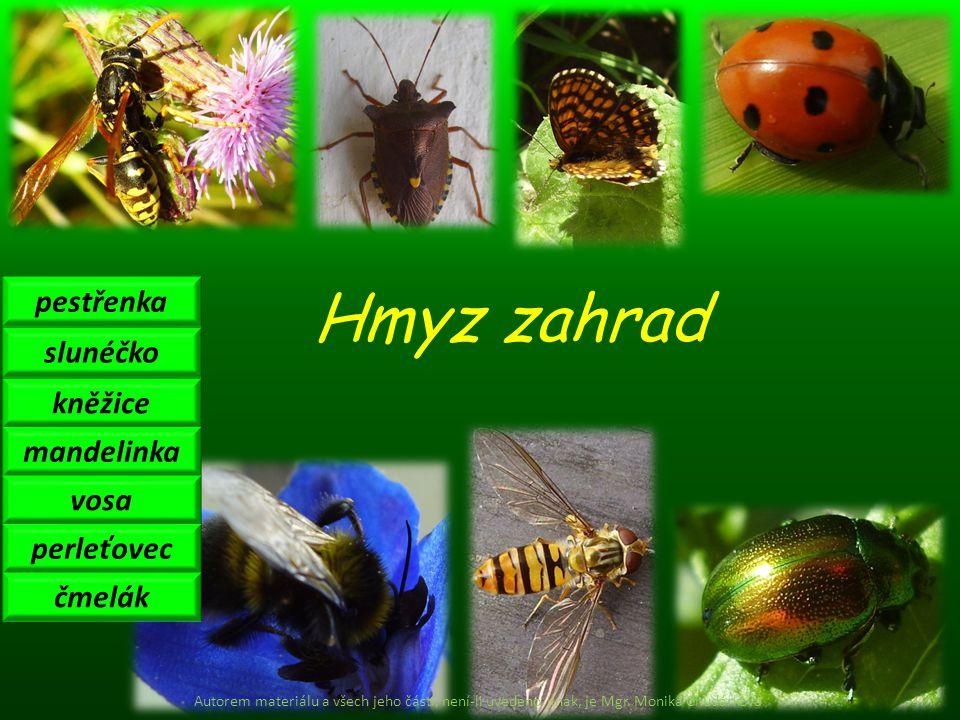 Hmyz zahrad pestřenka slunéčko mandelinka kněžice perleťovec vosa čmelák Autorem materiálu a všech jeho částí, není-li uvedeno jinak, je Mgr. Monika C
