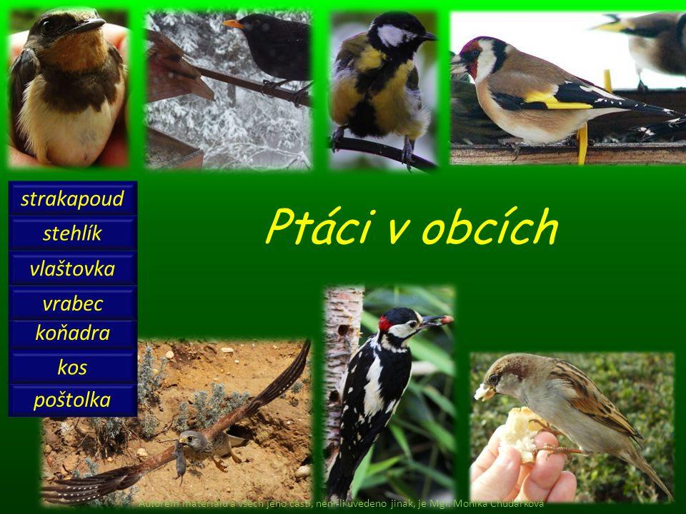 Ptáci v obcích koňadra stehlík strakapoud vrabec vlaštovka poštolka kos Autorem materiálu a všech jeho částí, není-li uvedeno jinak, je Mgr. Monika Ch