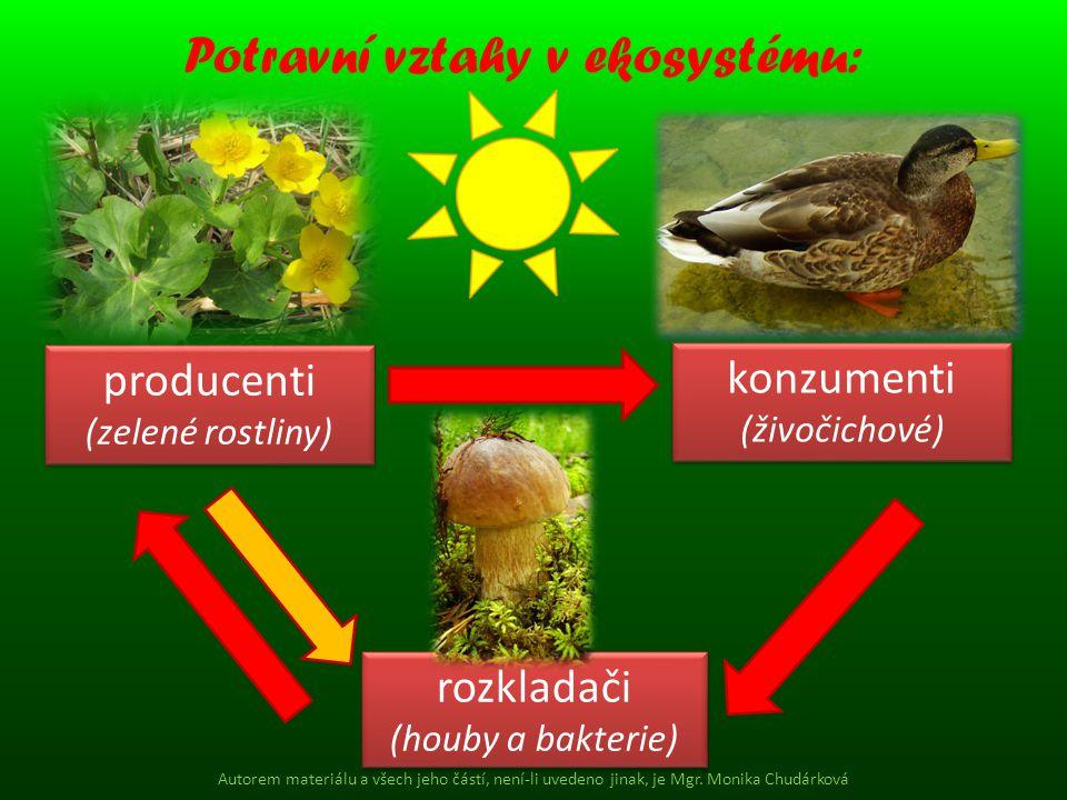 rozkladači (houby a bakterie) rozkladači (houby a bakterie) konzumenti (živočichové) konzumenti (živočichové) producenti (zelené rostliny) producenti